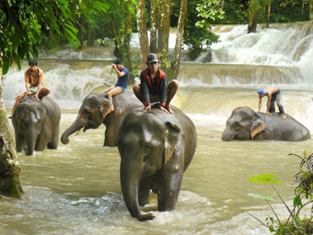 Elephant Riding in Laos