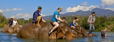 elephant tourism in laos