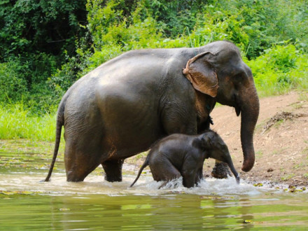 Elephant Conservation Center in Luang Prabang - Laos