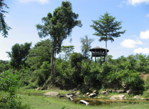 Wild Elephant Observation Tower