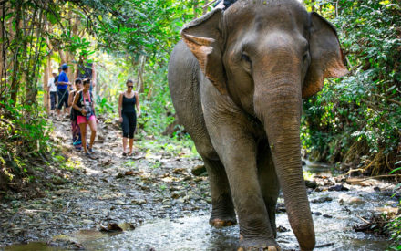 MandaLao Elephant Sanctuary in Luang Prabang