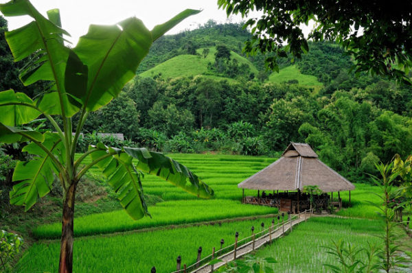 Luang Prabang and Kamu Lodge Tour