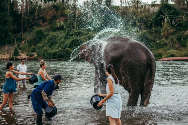 Laos Tour 11 Days: Elephant Village at Luang Prabang